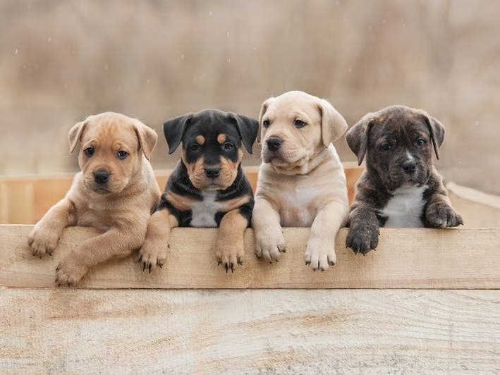 The Most Popular Dog Breeds In Metro Milwaukee For 2020