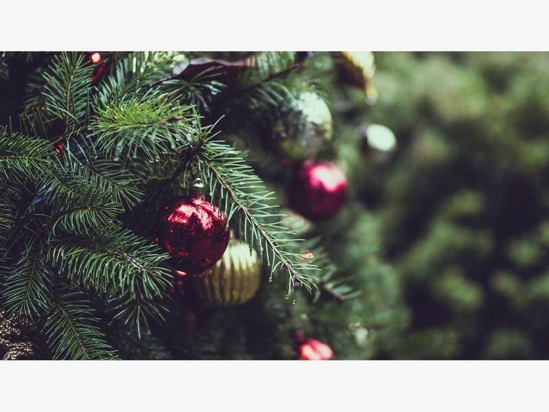 Pasco Offers Christmas Tree Recycling