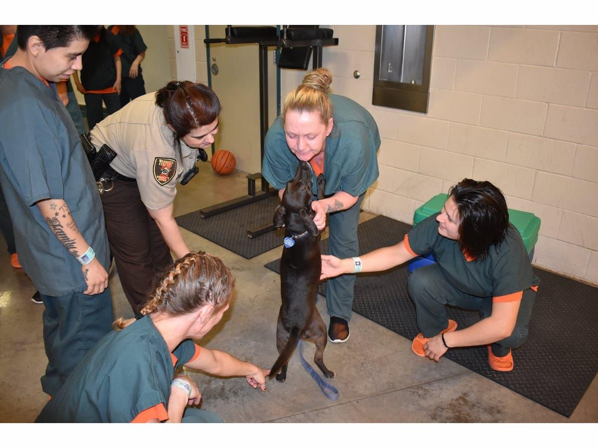 New Therapy Dog Program Begins At Washington County Jail