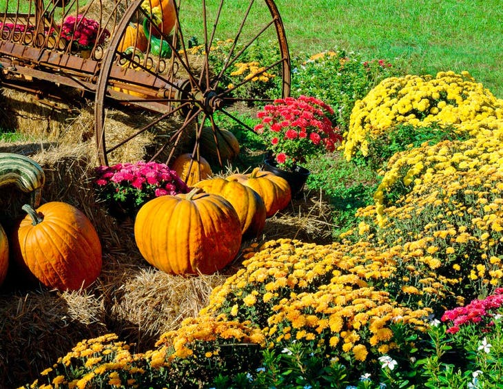 Fall Into Winter Gardening with a Rutgers Master Gardener