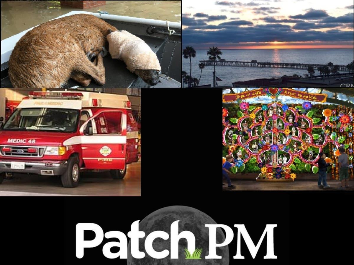 Ambulance Chase Deer Rescue Fairfax Victim Idd Body At