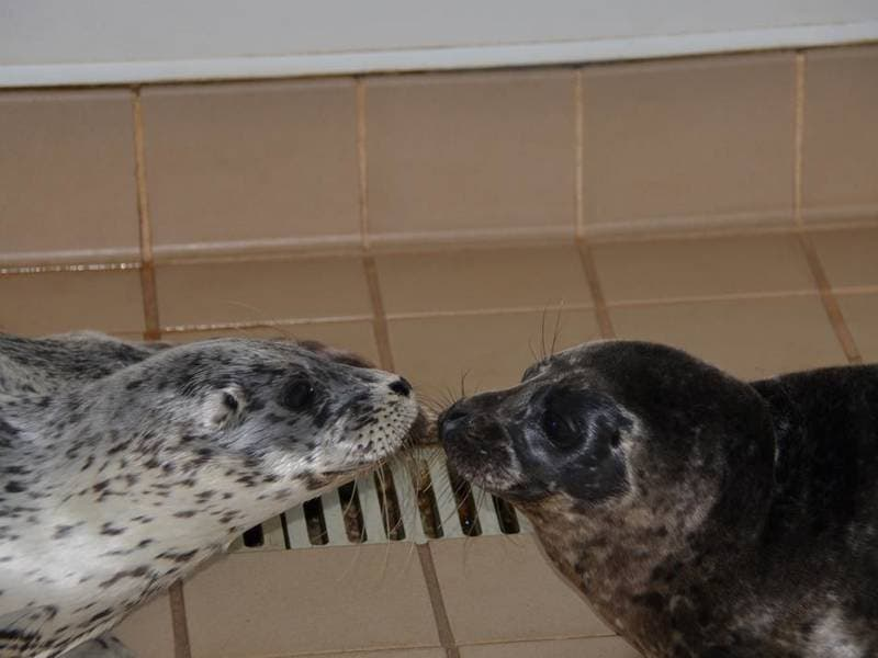 Protect, Preserve Lagunas Pinnipeds In Giving Day Fundraiser