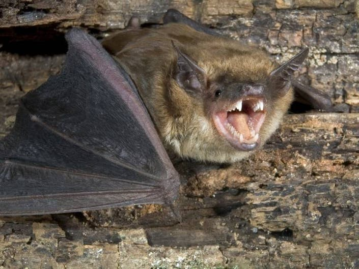 Rabid Bat Found Inside Orange County Commercial Building