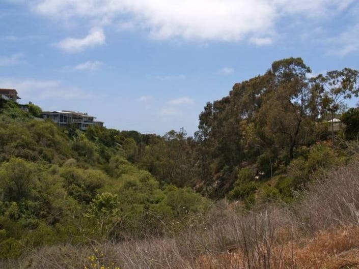 Illegal Trail In Buck Gully Reserve Could Take Years To