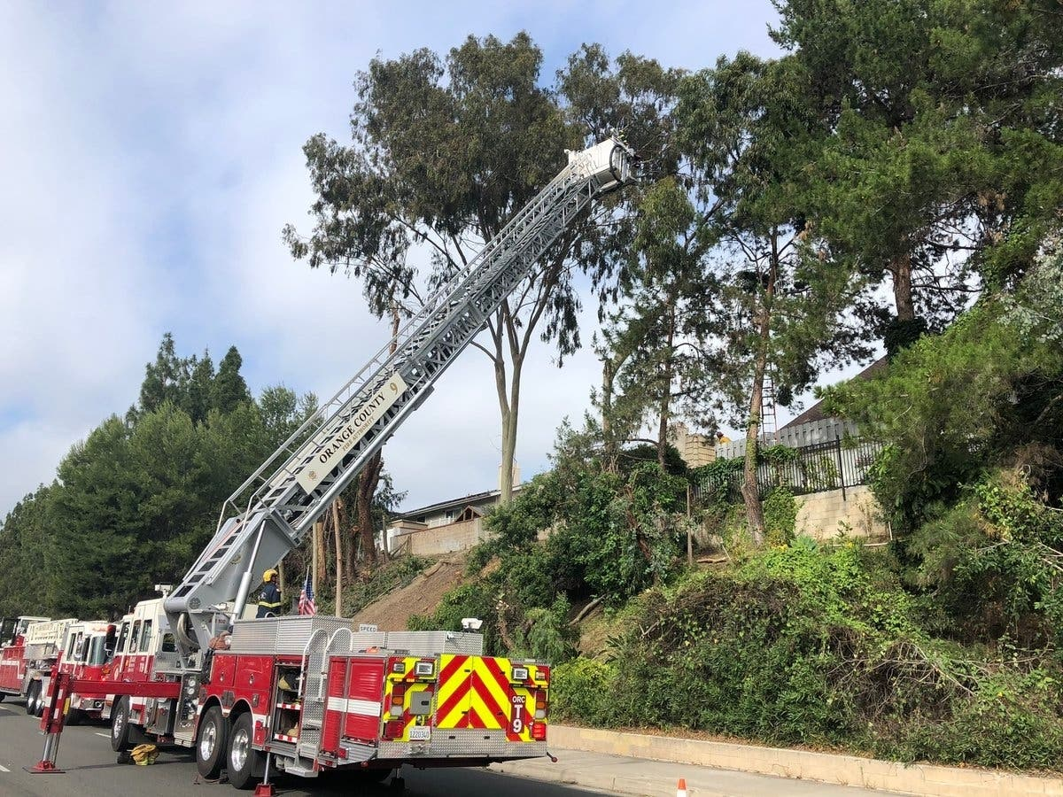 Tree Trimmer Dies In Laguna Hills Eucalyptus Tree Accident