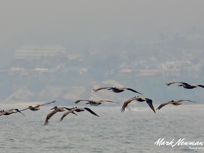 Rush Hour At The Beach: Patch Photo Of The Day