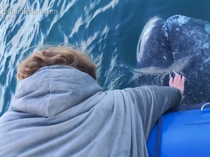 Visitors from the east coast got an up-close, hands-on look and feel of one of the largest creatures in the ocean.