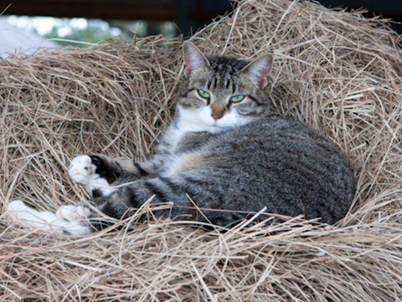 Homes Sought For 40 Plus Barn Cats In Loudoun County Ashburn Va Patch