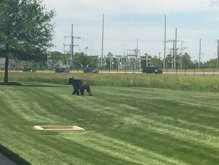 Black Bear Invades National Weather Service HQ In Sterling