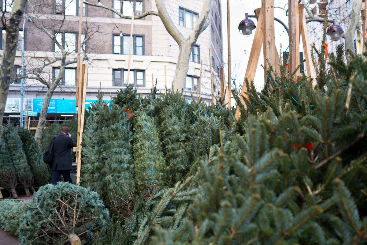'Tree Whisperer' Or Greenwich Greed: Your Christmas Tree for a Mere $1K | West Village, NY Patch
