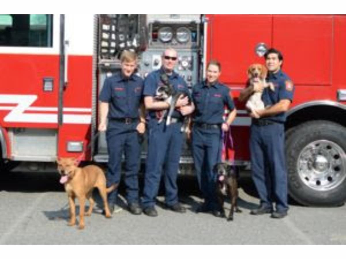 Arlington Firefighters Hold Drive For Animal Shelter Arlington Va Patch