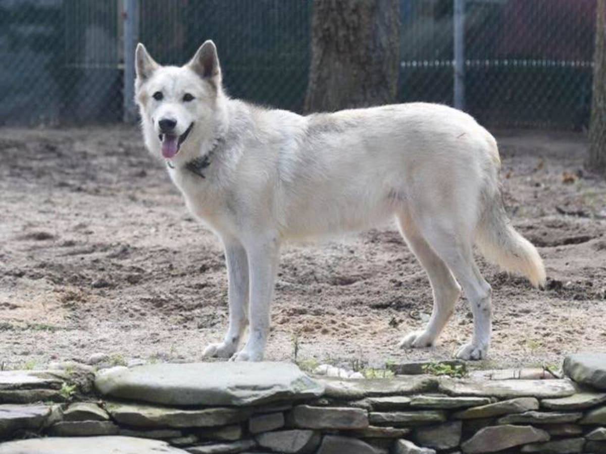 Wolf Stolen From Long Island Ecology Center: Patch Week In