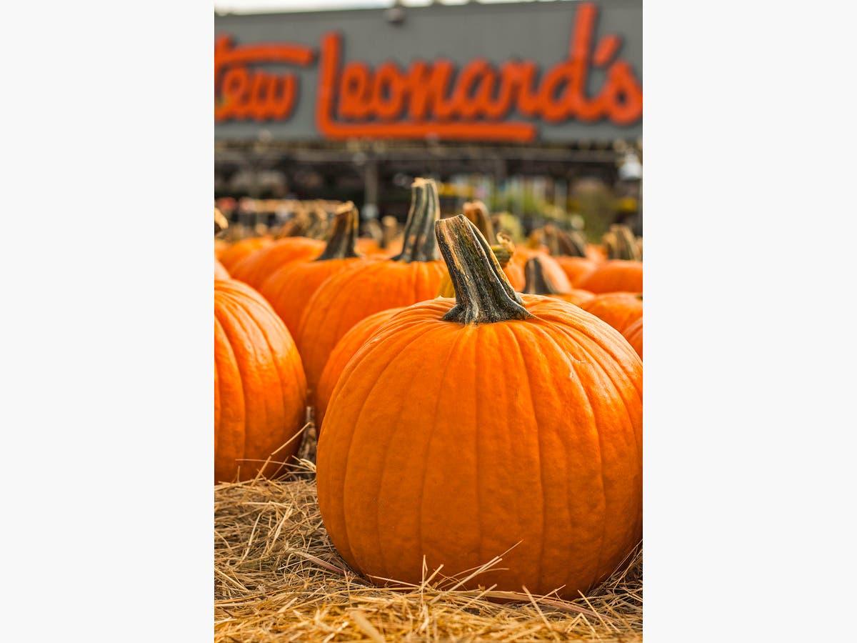 Halloween 2020 Long Island Stew Leonards Enjoy A Family Friendly Halloween Movie At Stew Leonard's