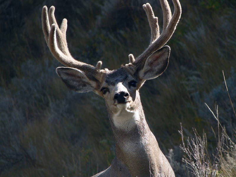 bowhunting season for deer and turkey well underway across texas