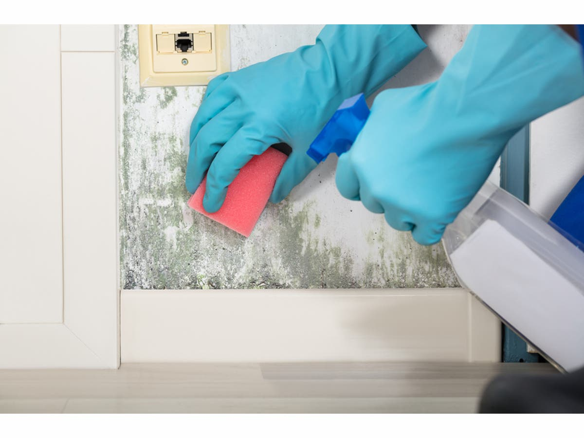 Laws Regarding Mold and Rental Properties in New Jersey