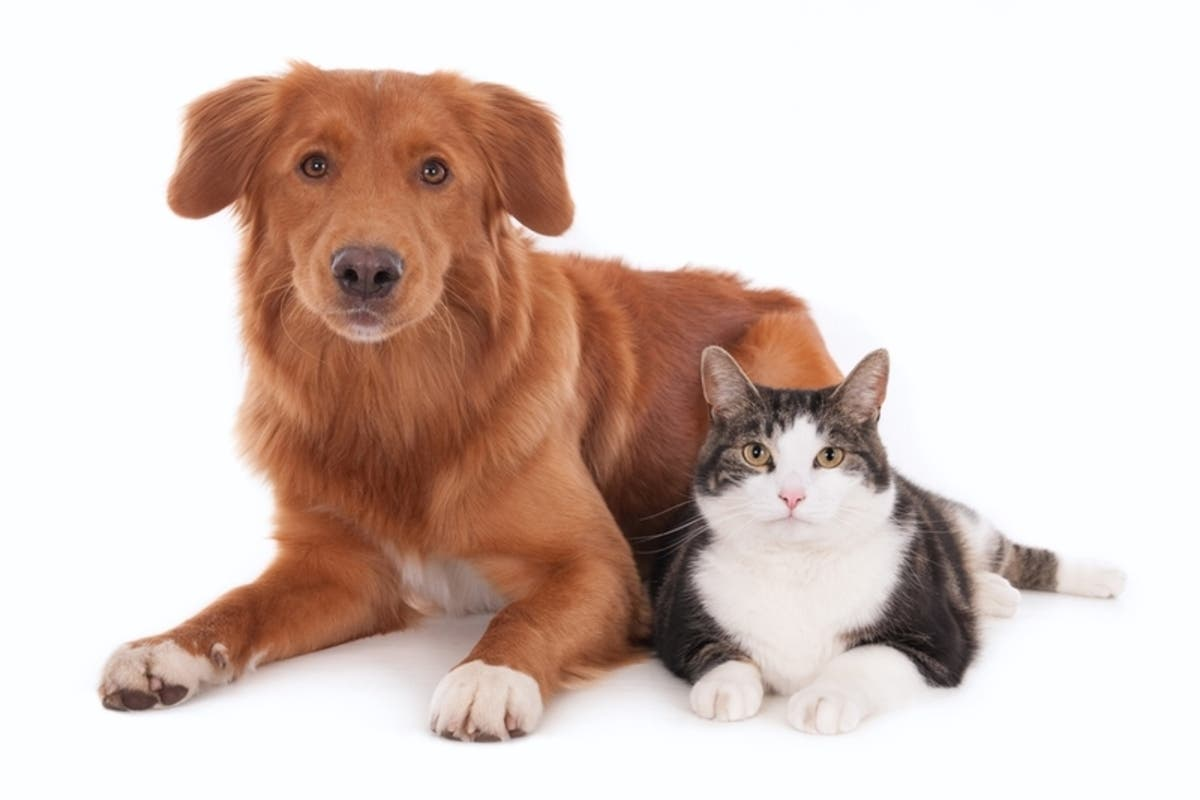 Free Rabies Clinic In Parsippany | Parsippany, NJ Patch