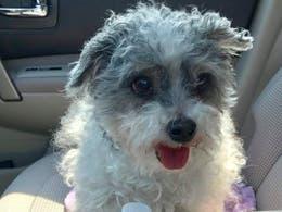 Tiny Dog Needs Food Allergy Friendly NJ Home