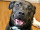 Dog Looking For Another Home After NJ Owner Passes Away
