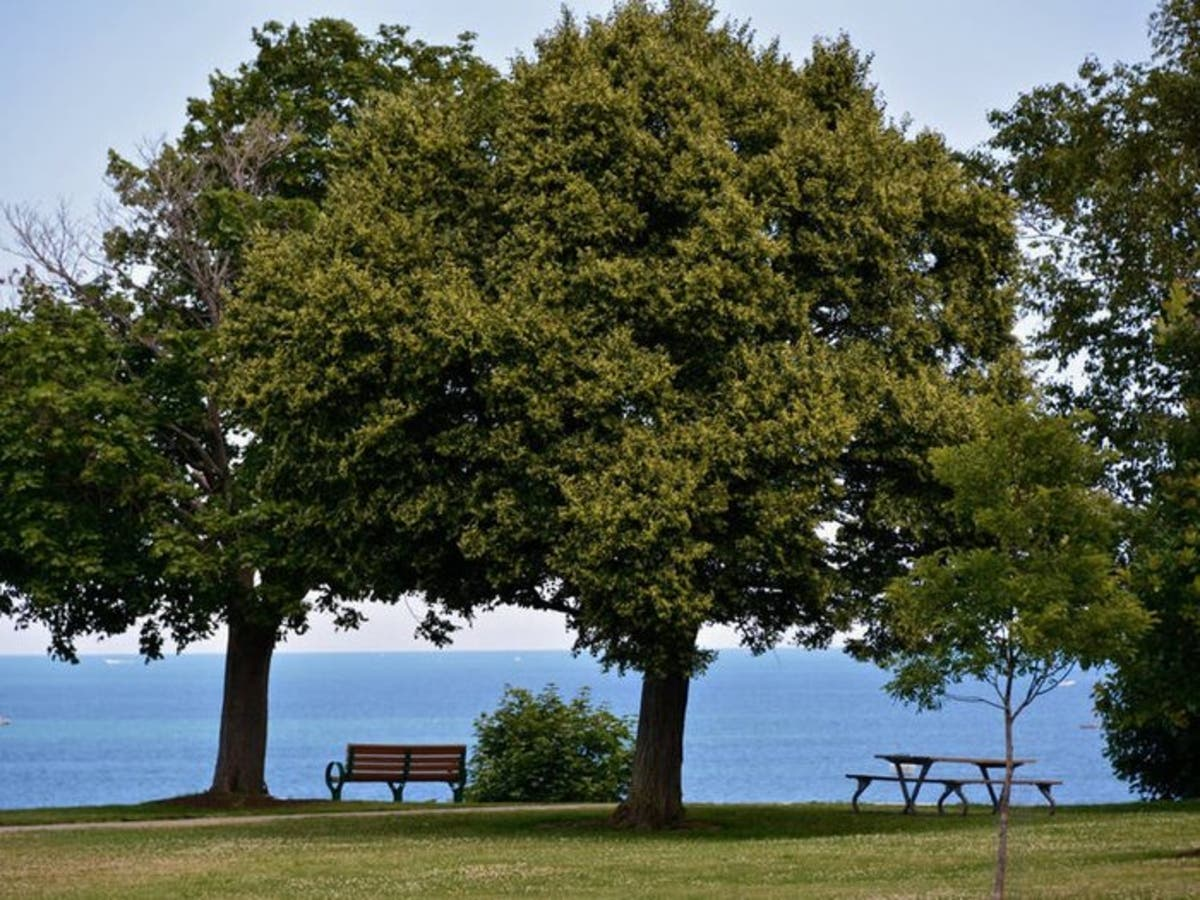 Tree Of Life Memorial Planned For Lakewood Park | Lakewood, OH Patch