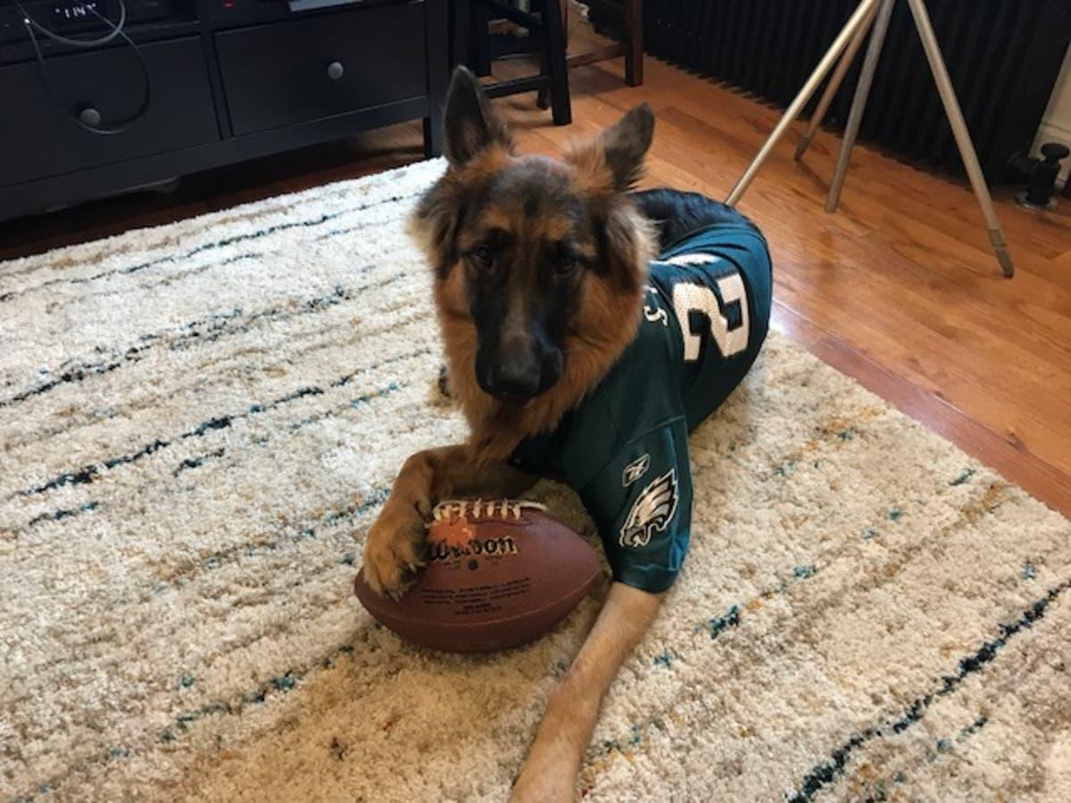 online store e7ce8 d280c GALLERY: Philadelphia-Area Pets Rock Eagles Gear | Radnor ...