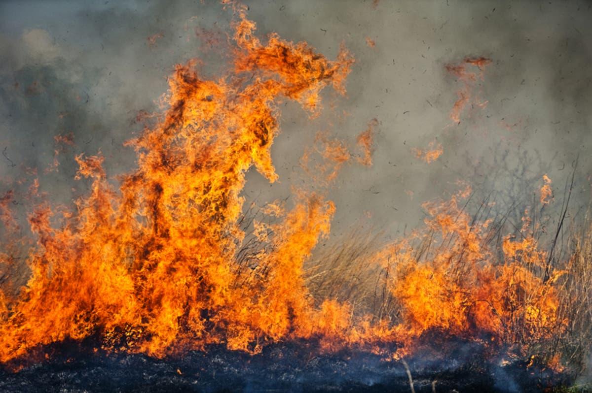 Blaze West of Temecula Burns Citrus Grove   Temecula, CA Patch