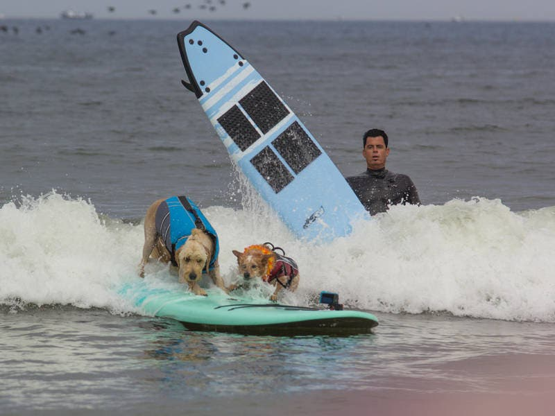 Dog Surfing in Pacifica: Patch Photo of the Week