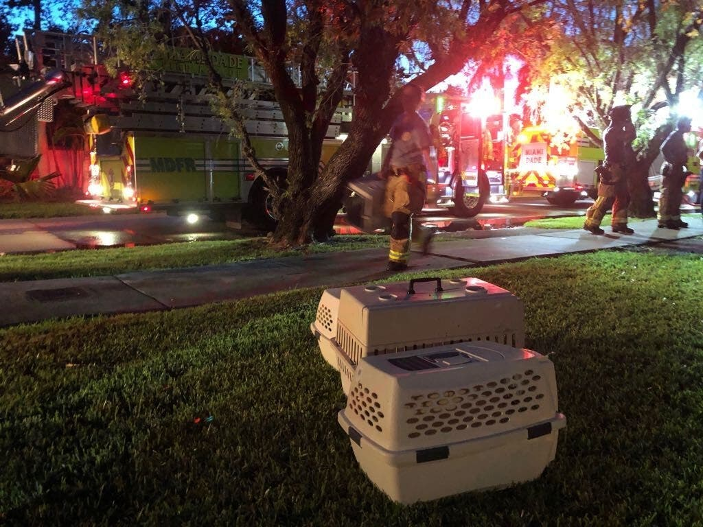 Eight Cats — 72 Lives — Saved From Burning Home | Pinecrest, FL Patch