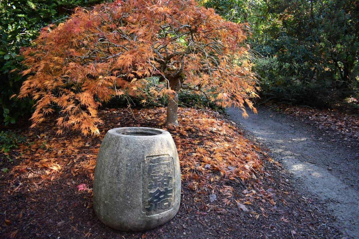 Seattle\'s Kubota Garden Is On Fire This Autumn | Seattle, WA Patch