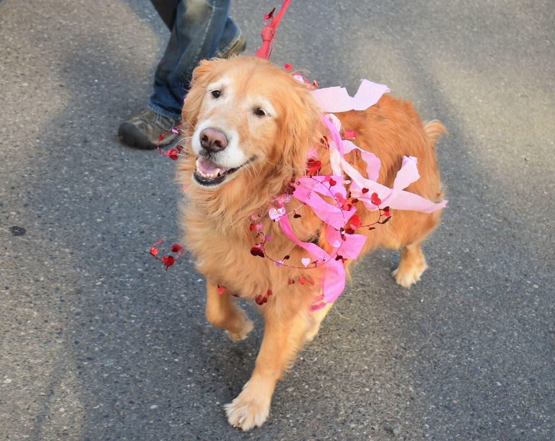 Starbucks' The Dog? Top 2017 Seattle Area Dog Names Revealed
