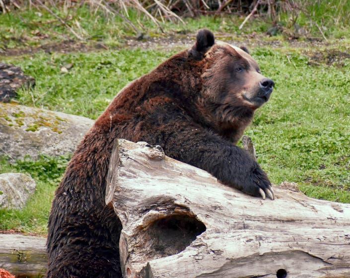 Bears et chubby