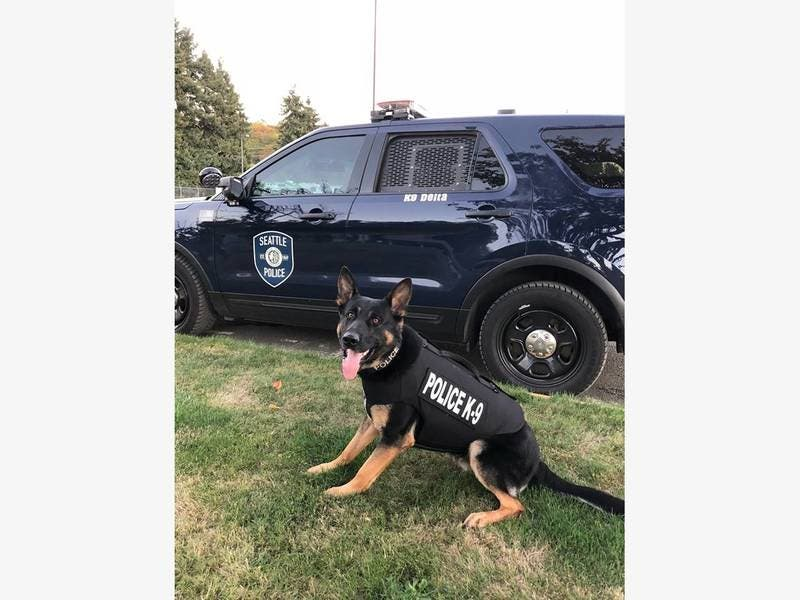 Former Wash. Cop Stole $33K From Police K9 Nonprofit: Feds