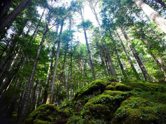 13 Earth Day 2019 Events Happening In Puget Sound