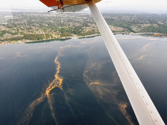 Tomato Soup Plankton Blooms Early In Puget Sound