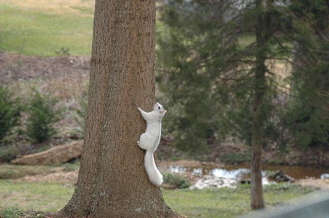 Rare White Squirrel Appears In East Cobb East Cobb Ga