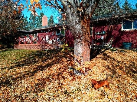 Enfield Public Works To Begin Yard Waste Collection