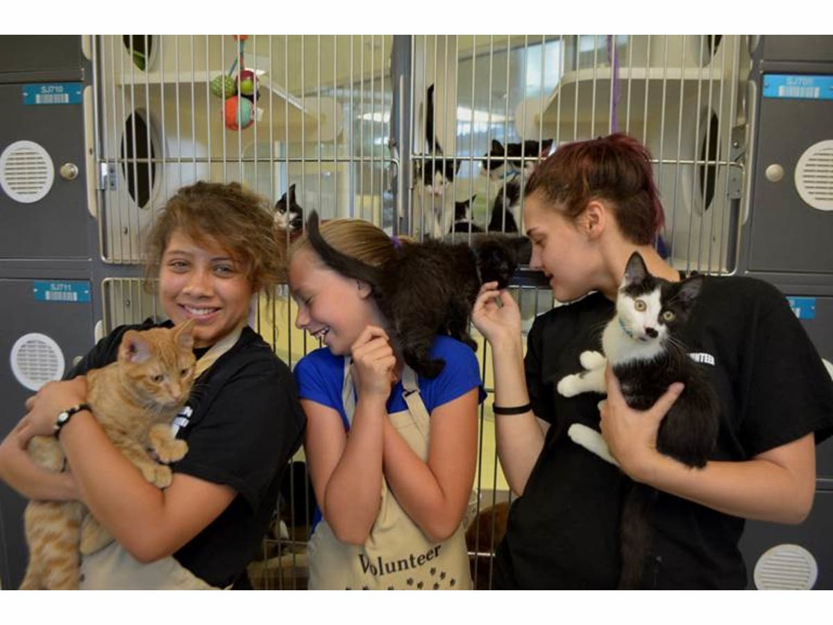Riverside Co  Animal Services Offering $25 Cat Adoption Fees