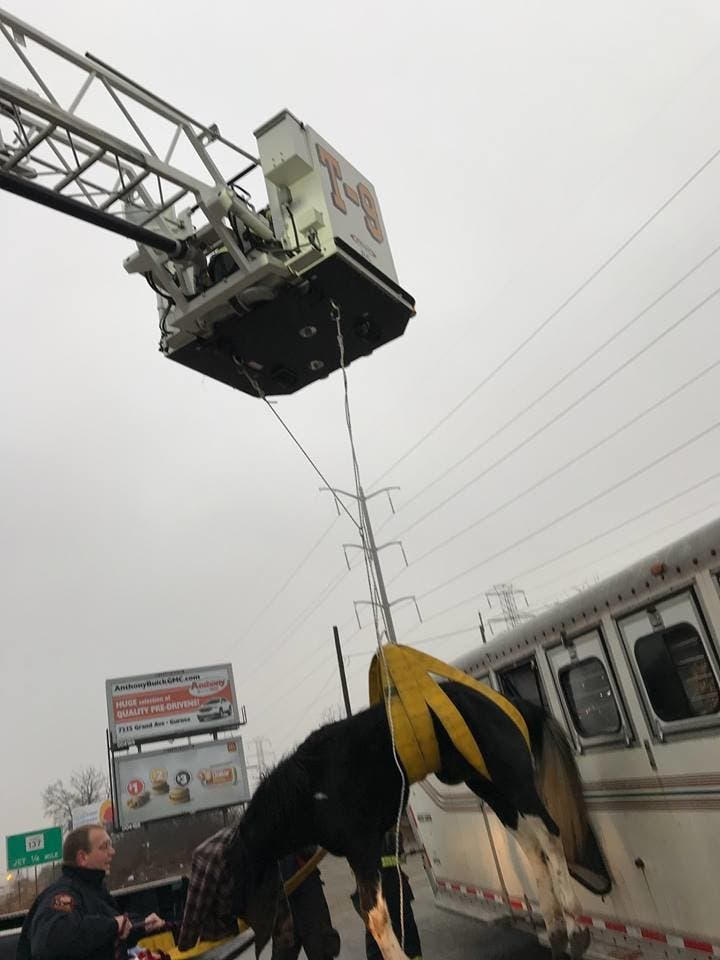 Horse Extrication' Makes Fire Department Get Creative | Lake