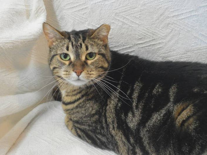 Adoptable Pet Of The Week: Lilly