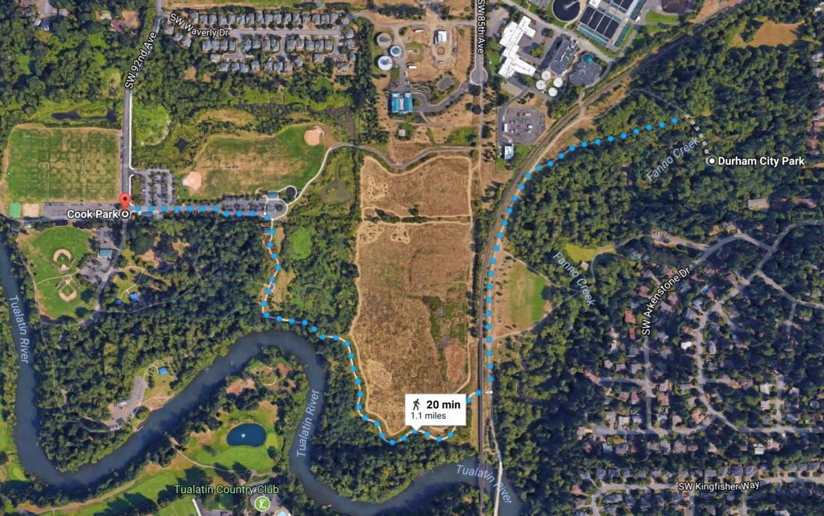 Possible Cougar Sighting In Durham Park Tualatin Police Warn Lake