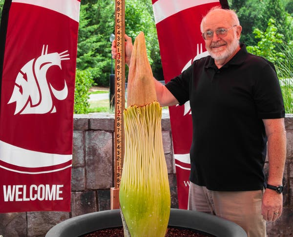 Watch Rare Corpse Flower Bloom At Wsu Vancouver Across Washington Wa Patch