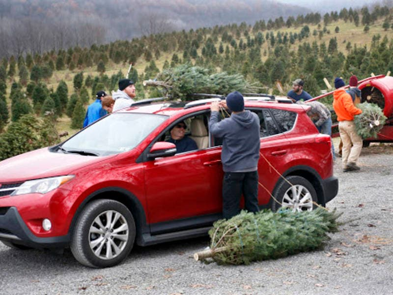 Here's A List Of The Best Christmas Tree Farms In North