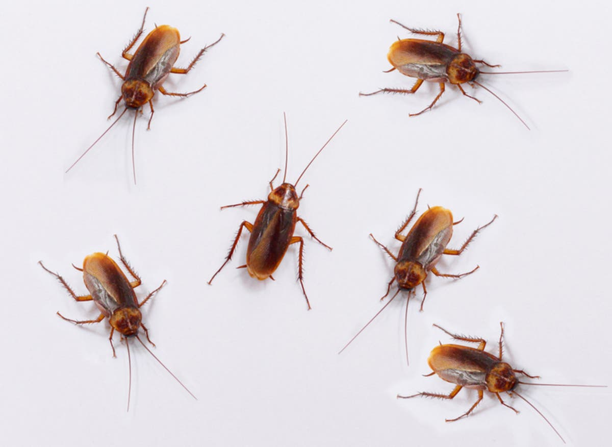 Roaches, Bed In The Kitchen: Health Scores Drop At 6 ...