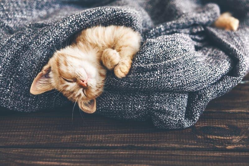 Charlotte Animal Shelter Needs Kitten Nursery Volunteers Nc Patch