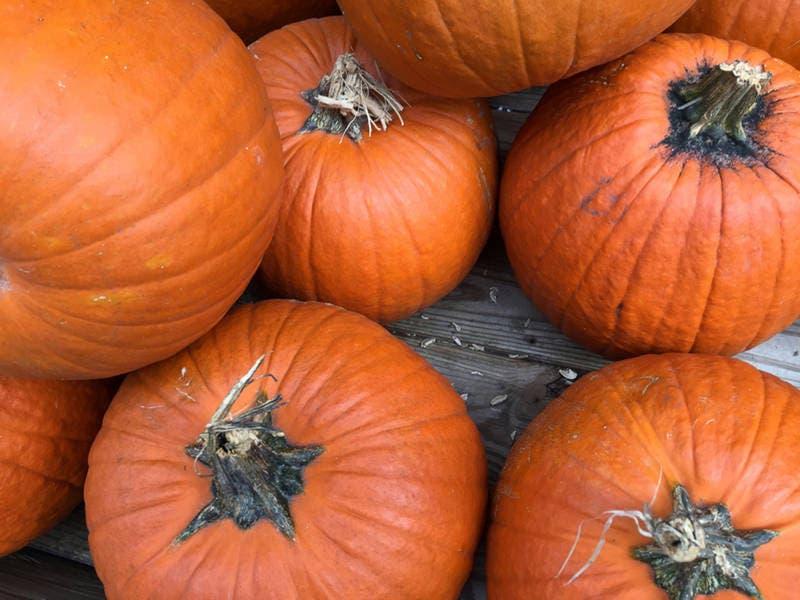 Sep 29 | kids pumpkin cupcake decorating | manassas, va patch.