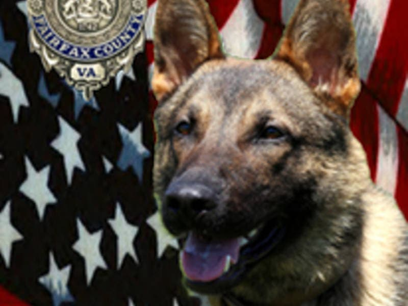 K9 Suddenly Dies During Call In Hybla Valley | Mount Vernon, VA Patch