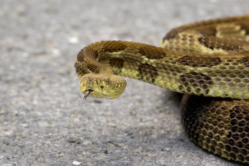 Snakes Becoming Active In Fairfax County: Tips For Residents