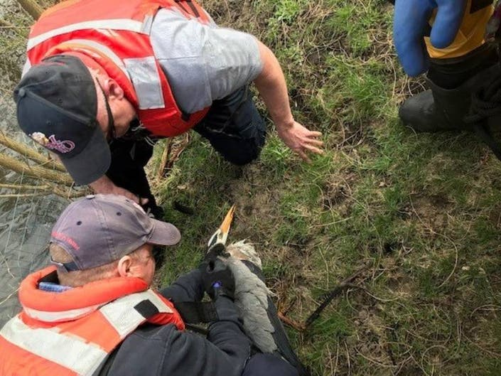 Firefighters Save Blue Heron Trapped In Fishing Line In Woodridge