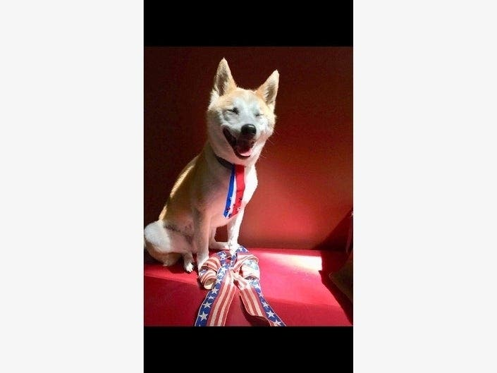 Send Patch Your Patriotic Pet Pics For Fourth Of July
