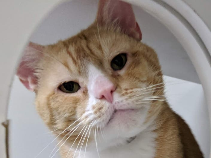 Patch Pet Of The Week: Tiger Is A Lover Not A Fighter