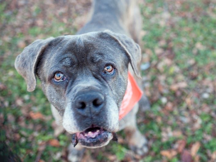Patch Pet Of The Week: Peewee Is Looking For A Home